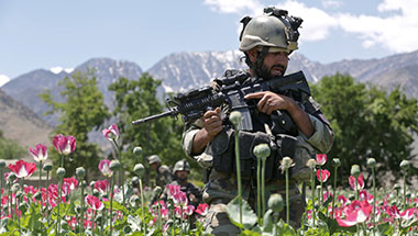 Image result for US soldiers guarding poppies afghanistan